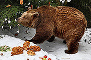 Bears' Christmas at the Český Krumlov Castle